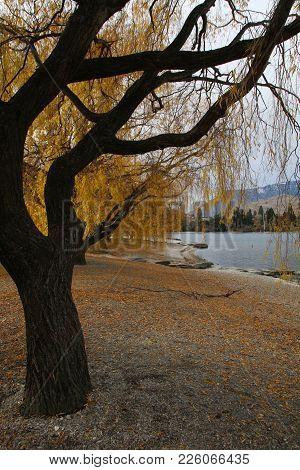 Autumn Golden Leaves Shedding Leaves Dark Tre Lake