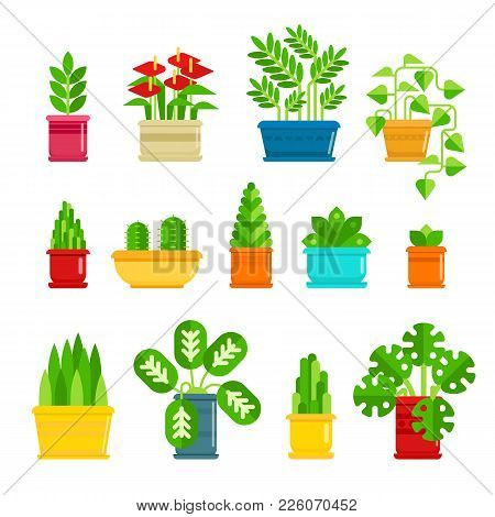 Set Of Houseplants Vector Icons In Flat Design. Various Plants Collection In Flowerpots Isolated On