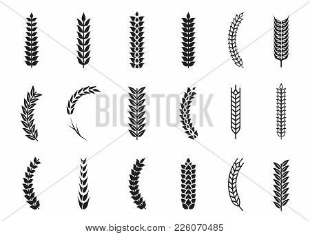 Vector Wheat Ears Icons. Oat And Wheat Grains Symbols