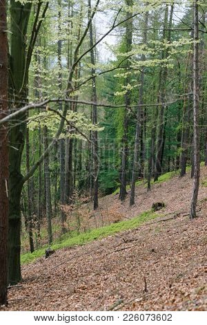 Walkway path through green trees in forest. Outdoor travel through woods in spring season, Czech Republic