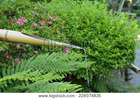 Nature Background Of Water Coming Out Of Bamboo Pipe At Japanese Garden