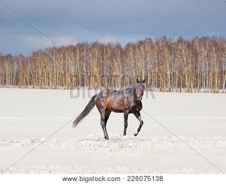 Beautiful Winter Landscape With A Brown Horse On A Snow-covered Field