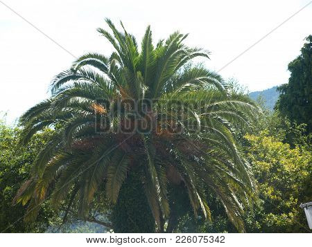 A Beautiful Background Photo Of Breathtaking Nature, A Palm Tree.