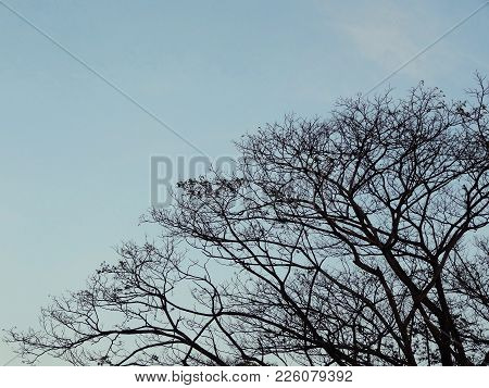 Natural Line Of Branch Leafless Bare Tree Silhouette