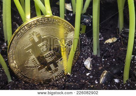 Crypto Currency. Bitcoin. A Crisis. The Find. Treasure. The Gold Coin Depreciated And Was Thrown To