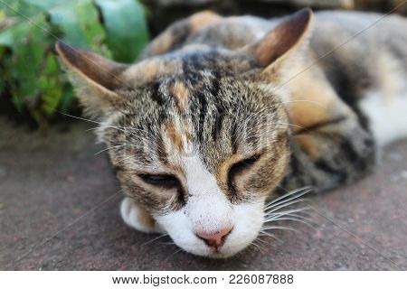 Close-up Image Of A Cat Sleeping On The Ground
