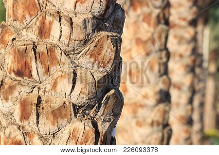 Palm Tree Trunk Texture Close Up Photo.