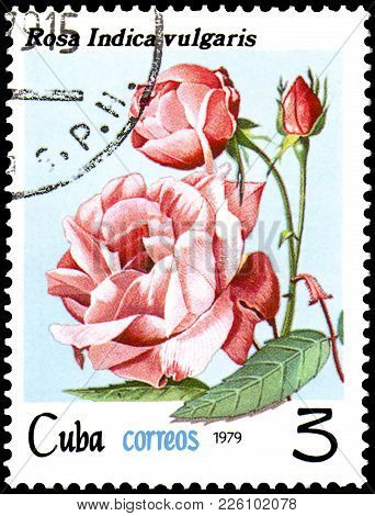 Cuba - Circa 1979: A Postage Stamp, Printed In The Cuba, Shows A Rose Indica Vulgaris, Series Roses