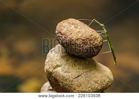A Green Stick Insect Stands Upon A Rock Stack In The Gold Coast Hinterland. Zen Rock Stack With Gree