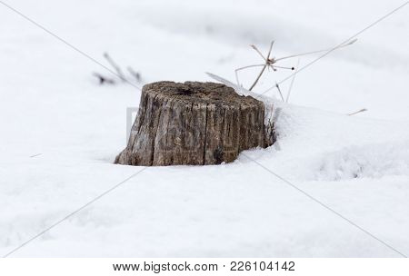 Old Tree Stump In Snow In Winter .