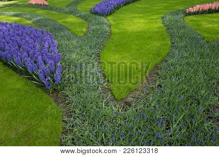 Row Of Colored Tulips And Hyacinth At A Garden In Lisse, Netherlands, Europe