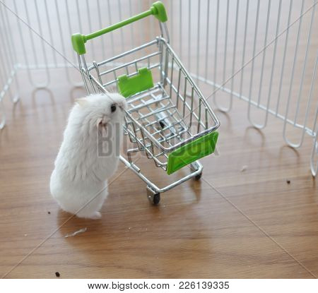 A Cute Winter White Dwarf Hamster Looking For Pet Food On The Empty Miniature Shopping Cart. The Win