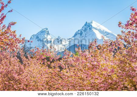 Scenic View Of Famous Watzmann Mountain Peak With Cherry Blossoms On A Beautiful Sunny Day With Blue