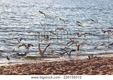 A Colony Of Gulls Fly Away On A Beach Against The Sun.