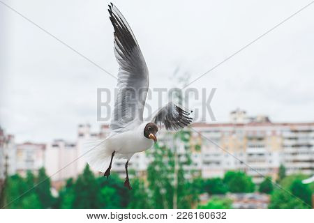 White-blue Wavy Parrot Isolated On White Background