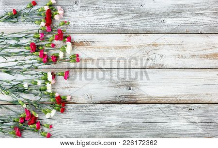 Colorful Carnations Forming Left Border On White Weathered Wooden Boards