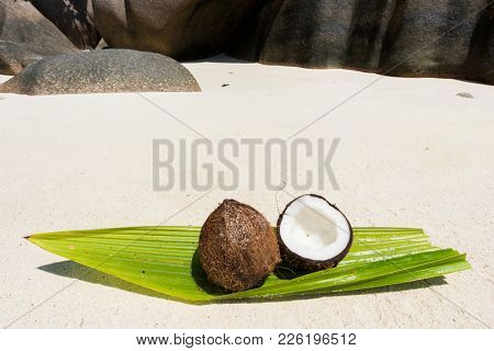 Coconut on the coconut palm leaf seen on Anse Source d'Argent beach, La Digue Island, Seychelles