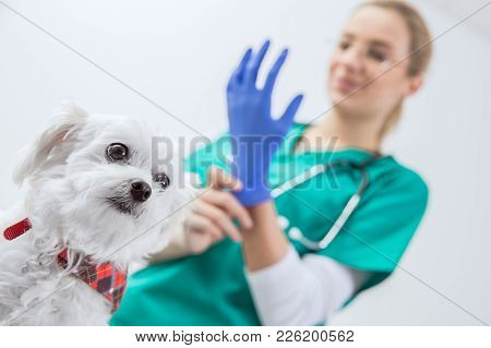 Dog Scared Before Traumatic Examination By A Female Vet