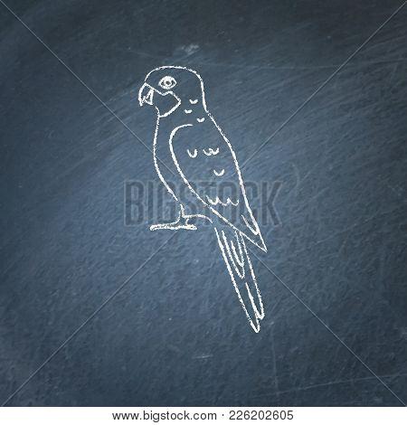 Rosella Parrot Icon Sketch On Chalkboard. Australian Tropical Bird Symbol Drawing On Blackboard.