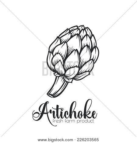 Hand Drawn Artichoke Icon. Vector Badge Vegetable In The Old Ink Style For Brochures, Banner, Restau
