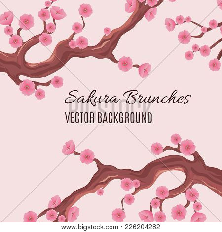Springtime Japanese Traditional Vector Background With Blossom Cherry Sakura Tree Brunches. Blossom