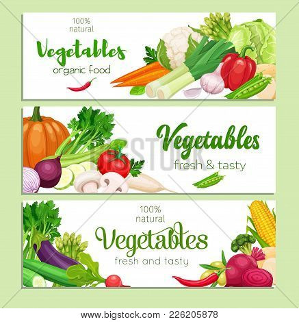 Banners Design With Vector Vegetables. Concept Healthy Food. Cabbage Or Pepper, Beets And Carrots. O