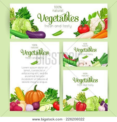 Corporate Style Template For Farm Business. Vector Vegetables. Concept Healthy Food. Cabbage Or Pepp