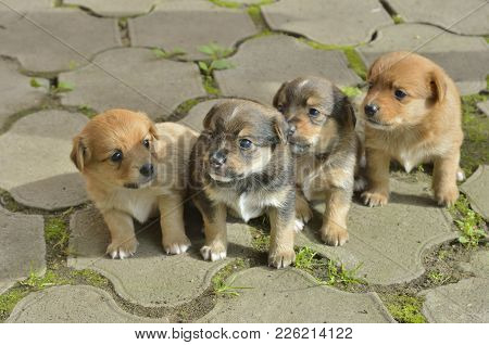 A Close Up Of The Four Small Puppies.