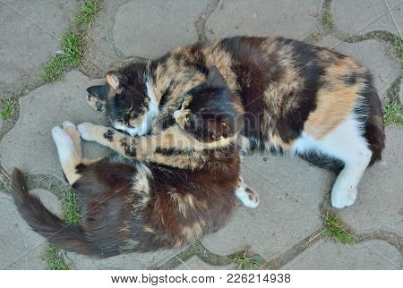 A Close Up Of The Two Sleeping Multicolored Cats.