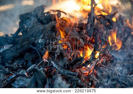 Embers And Glowing Embers. Glowing Coal In The Ash