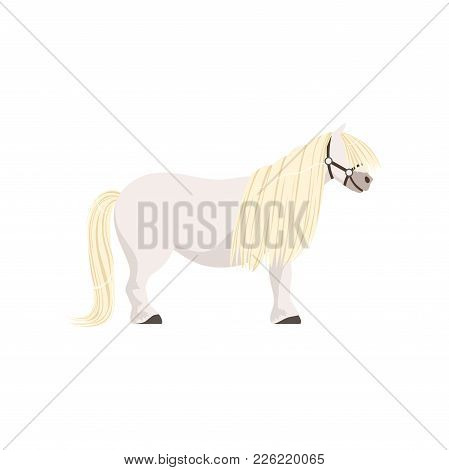 White Pony, Thoroughbred Horse Vector Illustration Isolated On A White Background