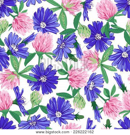 Floral Seamless Pattern With Wildflowers Chicory And Clover Isolated On White Background. Cute Roman