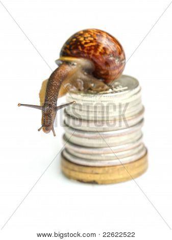 Snail On Coins