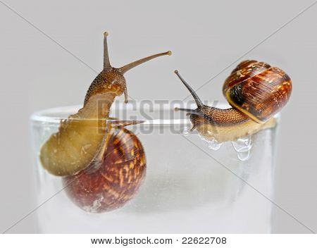 Two Small Snails On Grey Background