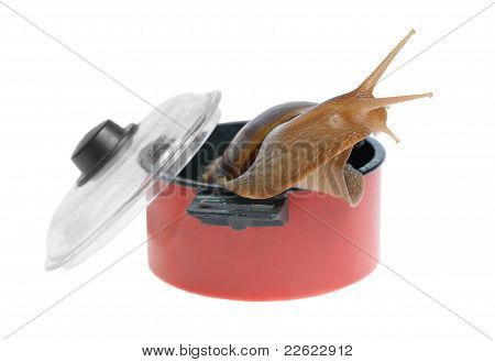 Big Snail In Saucepan Isolated On White