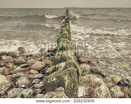 Old Wooden Breakwaters On A Shore Of Baltic Sea. White Foamy Water Splashing Stones On Beach.