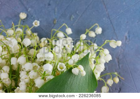 Lilly Of The Valley White Flowers And Green Leaves Close Up On Gray Stone Background