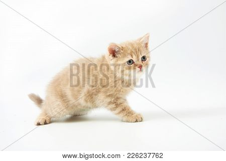 Small Funny Kittens On A White Background
