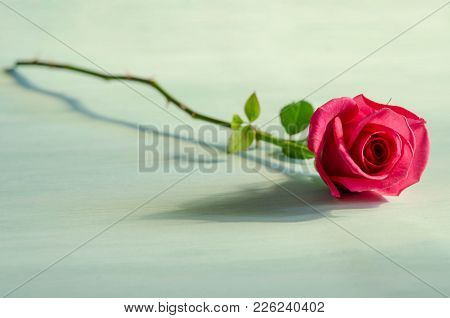 Single Red Rose Lies On Blue Table