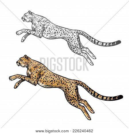 Cheetah Wild African Animal Vector Sketch Icon. Savanna Jaguar Panther Or Cougar Symbol For Wildlife