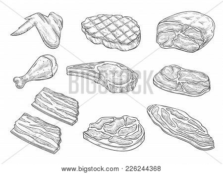 Meat And Chicken Sketch Icons. Vector Isolated Symbols Of Fresh Or Grill Chicken Leg And Wing, Pork