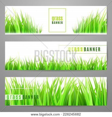 Grass Banner Set With Fresh Green Tufts Isolated On White Background. 3d Field Or Lawn Flat Horizont