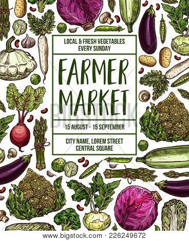 Vegetables Farmer Market Sketch Poster. Vector Design Template Of Fresh Veggies And Natural Farm Org