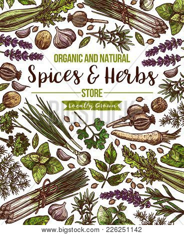 Herbs And Spices Farm Store Poster. Vector Sketch Design Template Of Organic Chili Pepper, Onion Lee