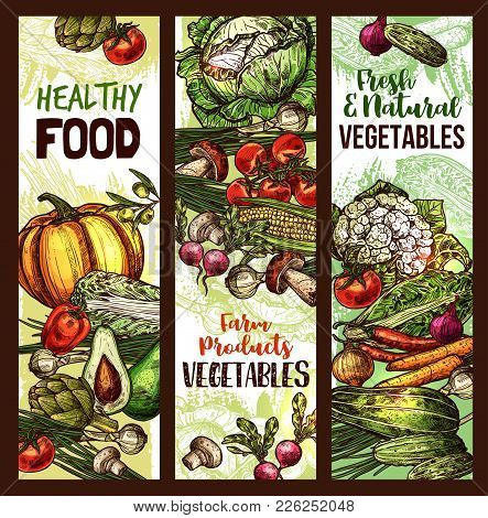 Vegetables And Fresh Organic Veggie Food Market Sketch Banners. Vector Pumpkin, Cauliflower Or Brocc