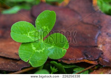 Horizontal Macro Photo Of A Bright Green 4-leaf Clover On The Left With A Green And Brown Background