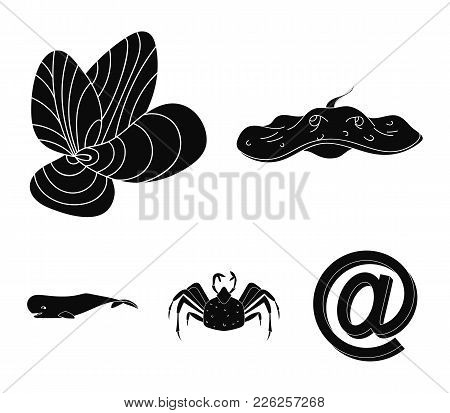 Electric Ramp, Mussels, Crab, Sperm Whale.sea Animals Set Collection Icons In Black Style Vector Sym