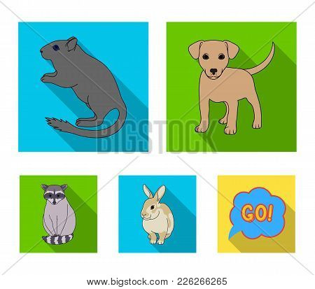 Puppy, Rodent, Rabbit And Other Animal Species.animals Set Collection Icons In Flat Style Vector Sym