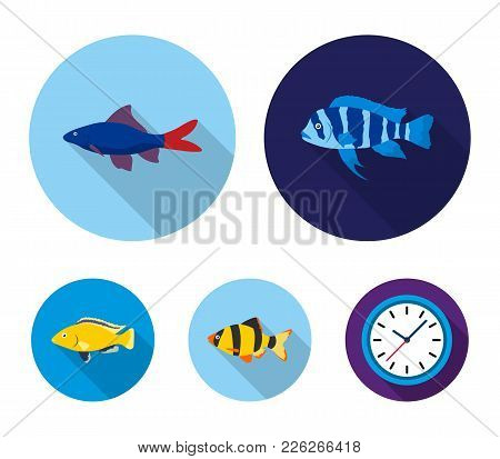 Botia, Clown, Piranha, Cichlid, Hummingbird, Guppy, Fish Set Collection Icons In Flat Style Vector S