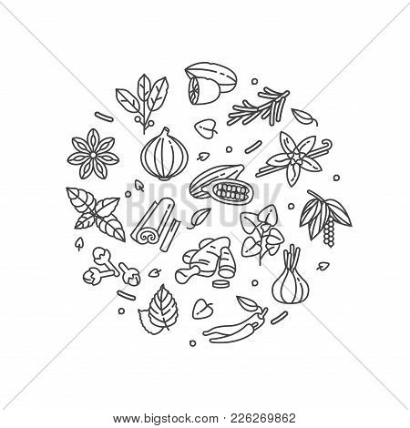 Vector Set Design Templates Icon And Emblems - Herbs And Spices. Different Spices Signs. Illustratio
